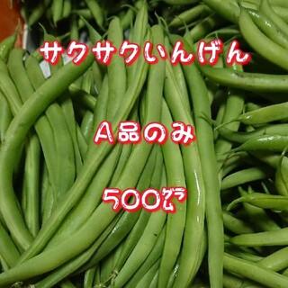 サクサクいんげん500㌘A品(野菜)