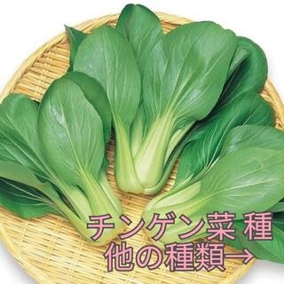 野菜種☆チンゲン菜☆変更→ラディッシュ つるなしいんげん  パクチー ビタミン菜(野菜)