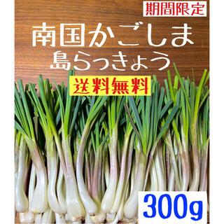 【南国かごしま育ち】島らっきょう 300g 送料無料  (野菜)