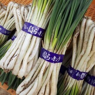 らっきょう(伊江島産)(野菜)