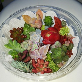 OoOo様専用 多肉植物   29   26(その他)