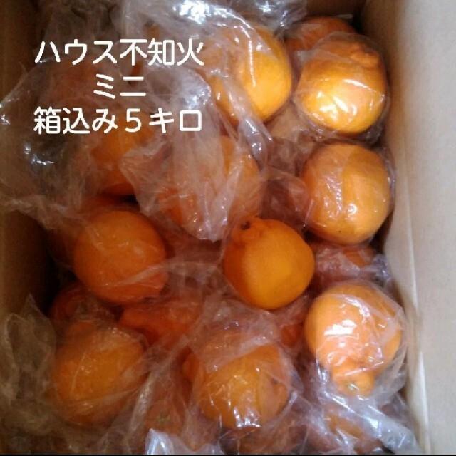 ミニ不知火 箱込み5キロ 食品/飲料/酒の食品(フルーツ)の商品写真