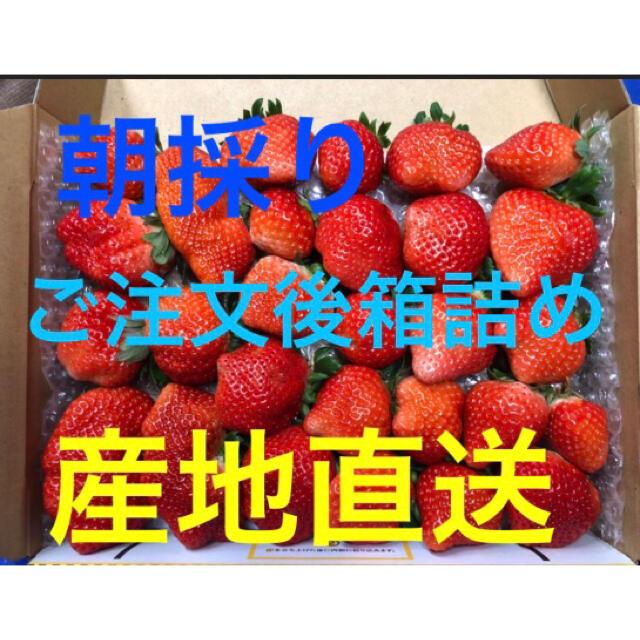 【長崎産】恋みのり いちご 食品/飲料/酒の食品(フルーツ)の商品写真