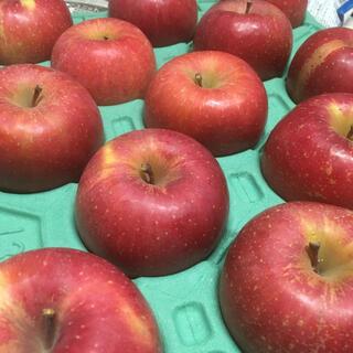 ⑤信州りんご サンふじ 家庭向け(フルーツ)