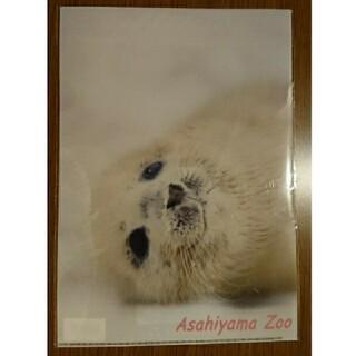 旭山動物園 A4 クリアファイル(クリアファイル)