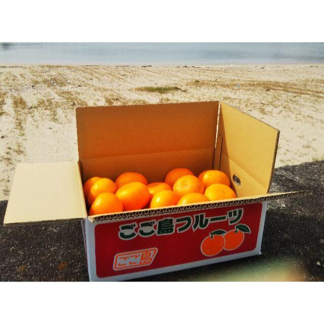 愛媛県産せとか(柑橘類)ワケアリ5kg箱(2021年3月20日ごろまで出品) 食品/飲料/酒の食品(フルーツ)の商品写真