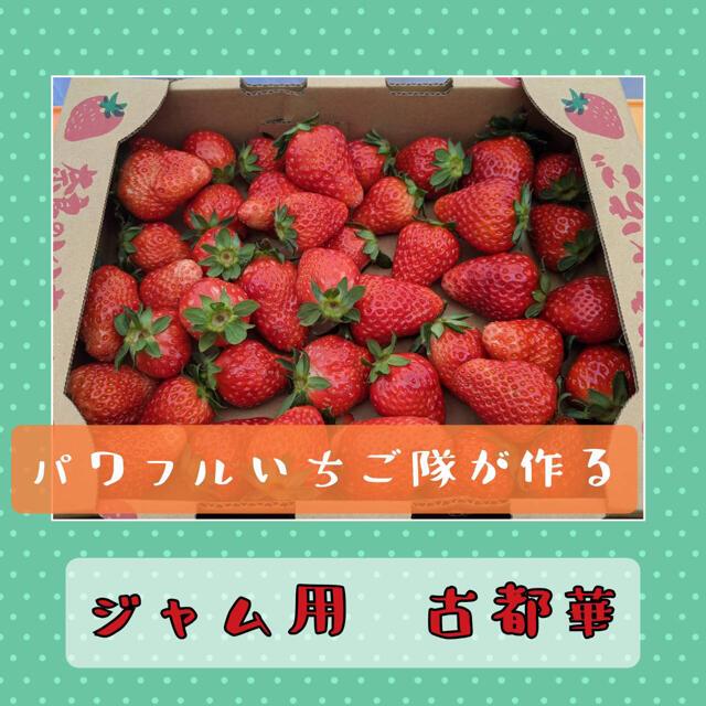 いちご ジャム用 古都華 1kg 食品/飲料/酒の食品(フルーツ)の商品写真