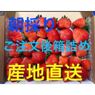 【長崎産】恋みのり いちご③(フルーツ)
