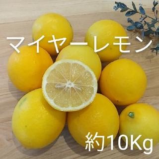 国産マイヤーレモン 約10Kg(フルーツ)