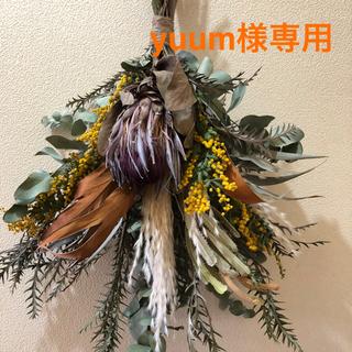 yuum様専用です❣️ドライフラワー スワッグ プロテア ミモザ(ドライフラワー)