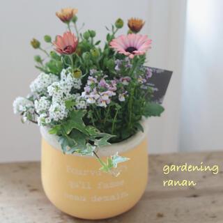 お花の贈り物❁❀✿✾キャンディcolor☆yellow❁春のcuteな寄せ植え(プランター)
