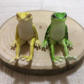 座る蛙 ミドリ(B) ・アルビノ