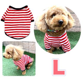 かわいい 春 夏 Lサイズ  ボーダー ストライプ 犬服 Tシャツ 小型犬 新品