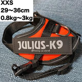 小型犬用ハーネスJULIUS-K9オレンジ
