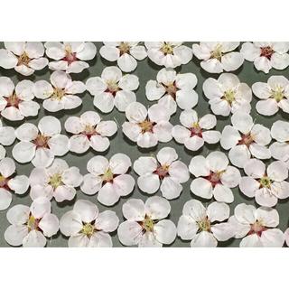 銀の紫陽花が作った薄紅色の梅の花のドライフラワー30冠‼️(ドライフラワー)