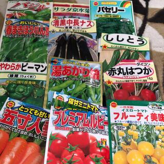 夏野菜 種子セット 12種類 小分け(その他)
