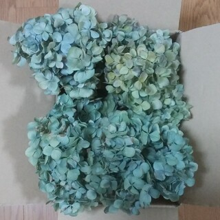 【めぐ様確認用】アジサイ ドライフラワー 青緑~緑青紫 ヘッド4(ドライフラワー)