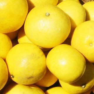 #土佐文旦 10キロ 中玉 優品 #文旦 #ぶんたん #みかん #果物(フルーツ)