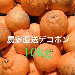 濃い味柑橘 デコポン中玉10kg   愛媛県産 農家直送 ご家庭用(フルーツ)