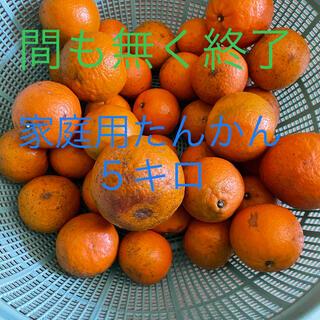 家庭用無農薬 たんかん5キロ/沖永良部島産(フルーツ)