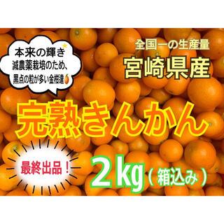 【最終出品!!】完熟❣️露地きんかん2㎏(送料込み)/果物 金柑(フルーツ)