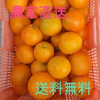 愛媛県産宮内伊予柑10kg(訳有りお買い得)(フルーツ)