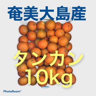 南国 奄美大島産 タンカン10kg(フルーツ)
