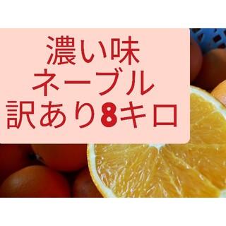 濃い味ネーブル、訳あり8キロ+α、熊本産(フルーツ)