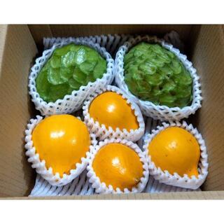沖縄のレアフルーツ 甘くとろける!沖縄産アテモヤ、カニステルのセット(フルーツ)