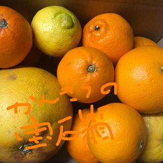 瀬戸内海から訳あり!柑橘の詰め合わせ増量!(フルーツ)