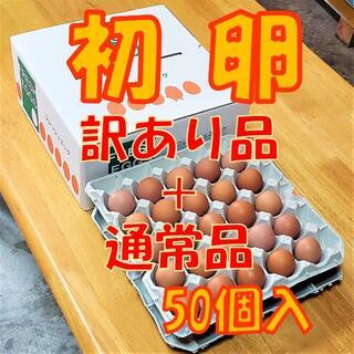 3/9発送【訳アリ品+通常品混合】初卵☆50個