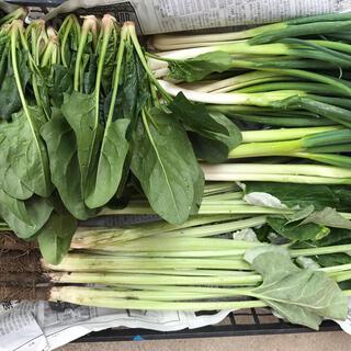 無農薬減農薬野菜セット