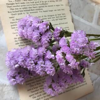 小分け 薄紫 スターチス ドライフラワー 花材(ドライフラワー)
