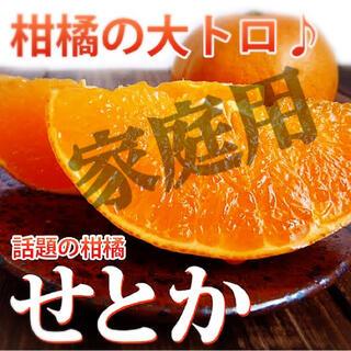 高級みかん【せとか】秀品 Mサイズ 6kg  美味しいせとか!!(フルーツ)
