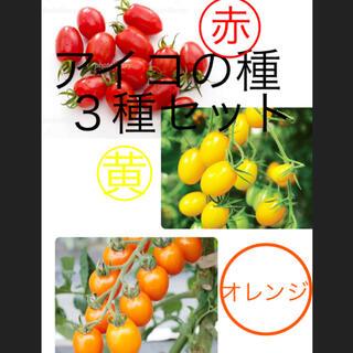 あいこトマトの種3色セット、赤、黄色、オレンジ(その他)