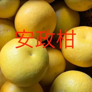 訳あり あんせいかん 10キロ   レモン2個オマケ(フルーツ)