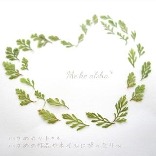 【No. 11・小さめカット】ボタニカル シダ 葉 素材 押し花 ドライフラワー(ドライフラワー)