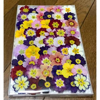 C⑤ 銀の紫陽花が作った小さめプリムラのドライフラワー(ドライフラワー)