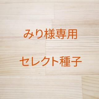 みり様専用 セレクト種子 7袋(野菜)