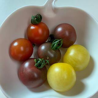 ステラミニトマトの種 10粒 自家採種(野菜)