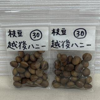 お得!枝豆 越後ハニーの種 60粒 自家採種(野菜)