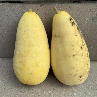 バナナまくわ瓜の種 10粒 自家採種(野菜)