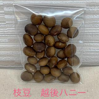 枝豆 越後ハニーの種 30粒 自家採種(野菜)