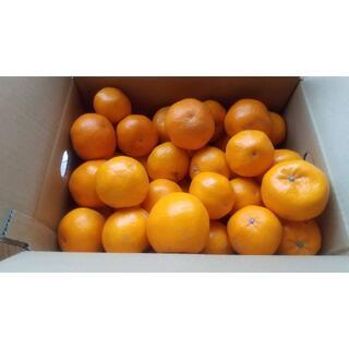 【農家直送】はるみみかん キズあり サイズ混合 5キロ 送料込み(フルーツ)