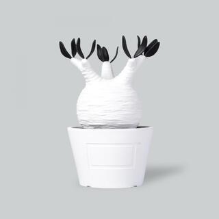 メディコムトイ(MEDICOM TOY)のbotanize vcd pachypodium gracilius white(その他)