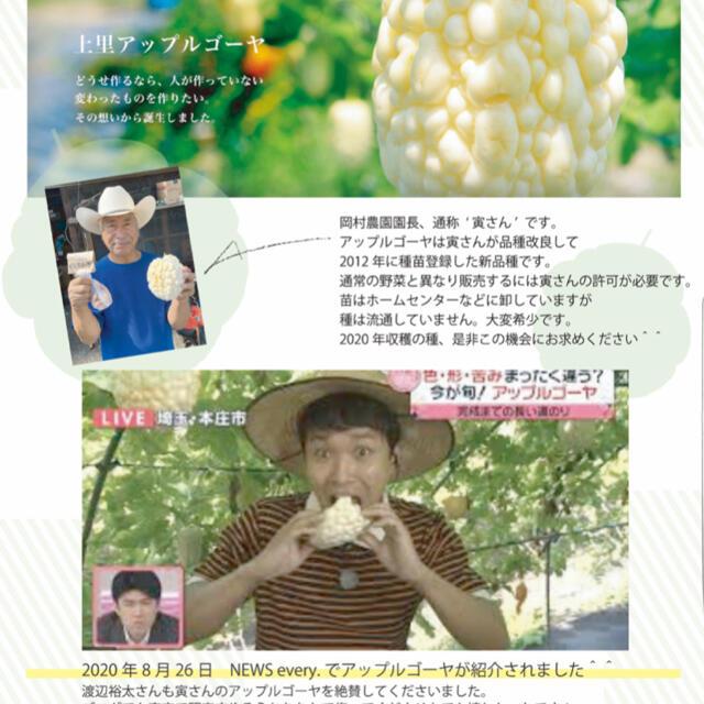31061★HT7★上里岡村農園寅さんのアップルゴーヤ白秀のタネ7 粒 食品/飲料/酒の食品(野菜)の商品写真