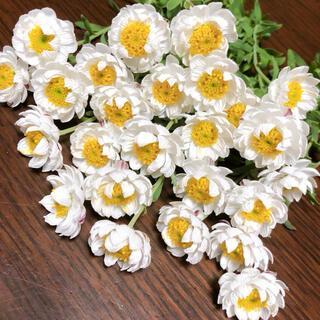 ドライフラワー  花材 花かんざし25本(ドライフラワー)