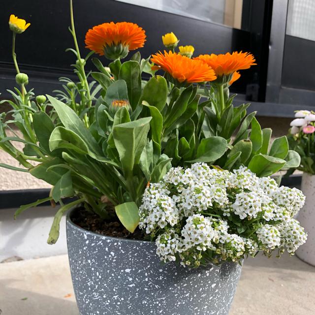 オレンジな寄せ植え ハンドメイドのフラワー/ガーデン(プランター)の商品写真