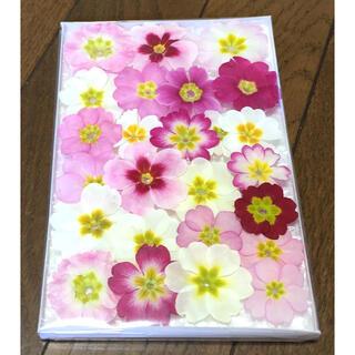 桜② 銀の紫陽花が作った満開の桜のようなプリムラのドライフラワー(ドライフラワー)