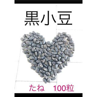 希少 黒小豆といんげんの種セット グリーンカーテンにも(その他)